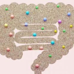腸内環境を整えたい方、必見!!|徳島・鳴門の発酵よもぎ蒸しサロンRomanif