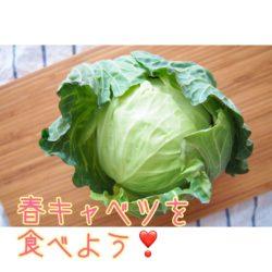春キャベツを食べよう!|徳島・鳴門の美容鍼灸と発酵よもぎ蒸しサロンRomanif